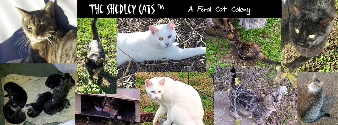 Chronicles of the Shedley Cats