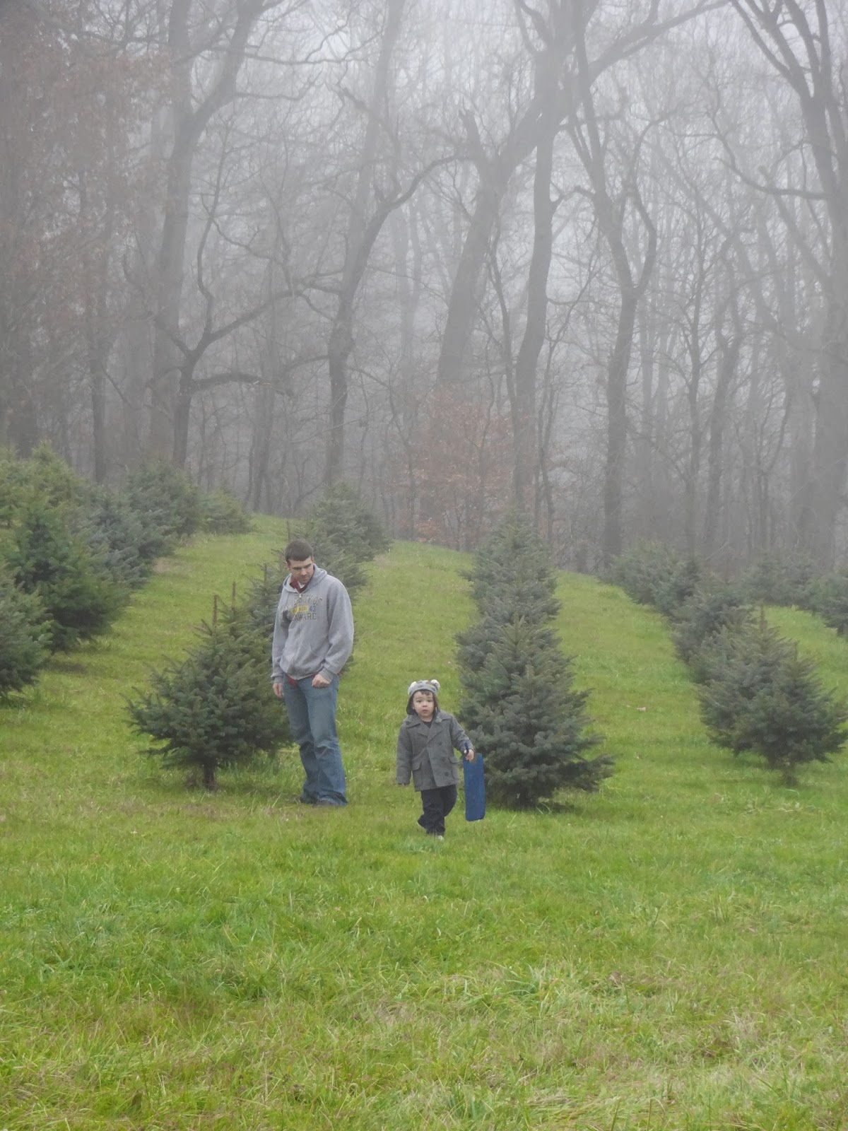 2304 Miles: Christmas Tree Farms: Old Stone Farm and Evergreen Acres