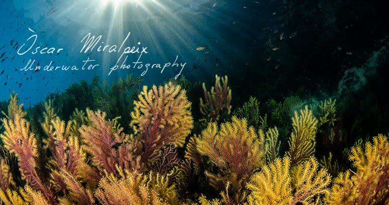 Òscar Miralpeix - Underwater photography