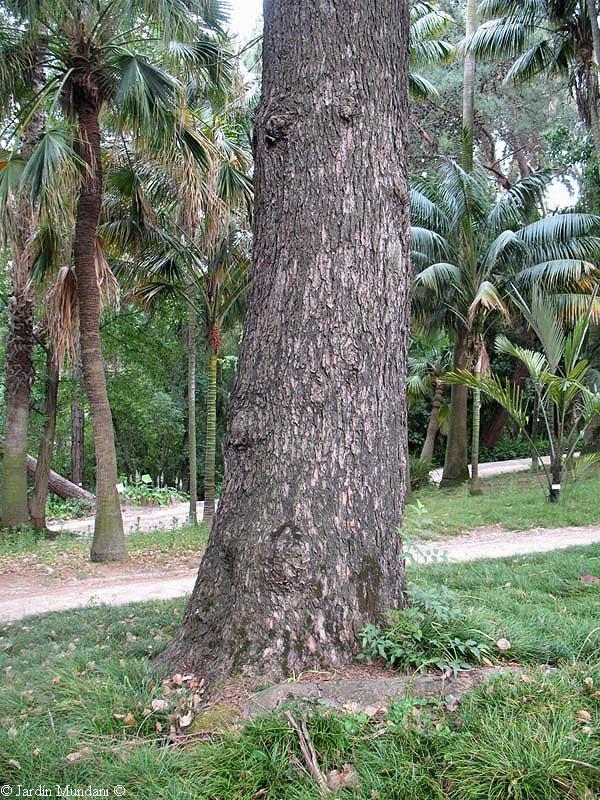 Sangrando en verde la lignina levant los rboles hacia for Arboles nativos de colombia jardin botanico