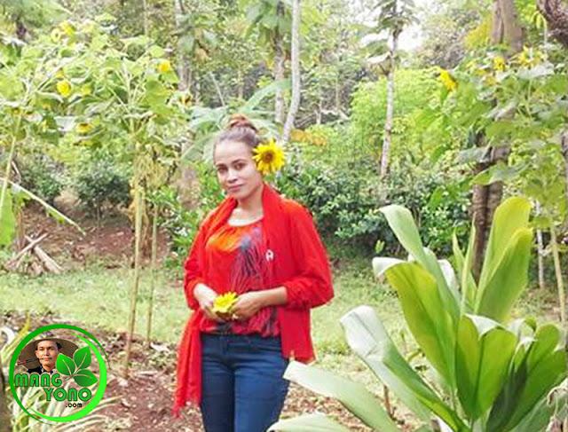 Lurah Yuli Merdekawati dan Bunga Matahari