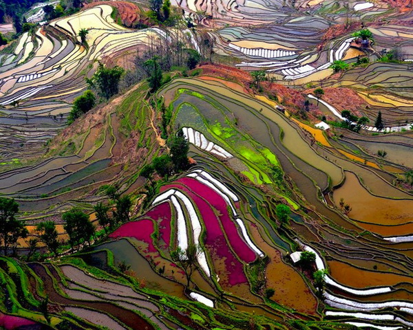 Rice terraces in Yunnan, China