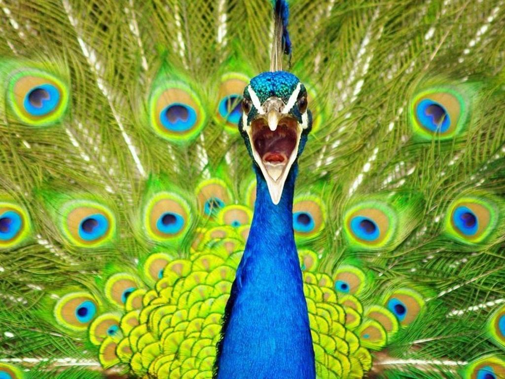 Desktop Wallpapers,Animals Wallpapers,Flowers Wallpapers, Birds ...