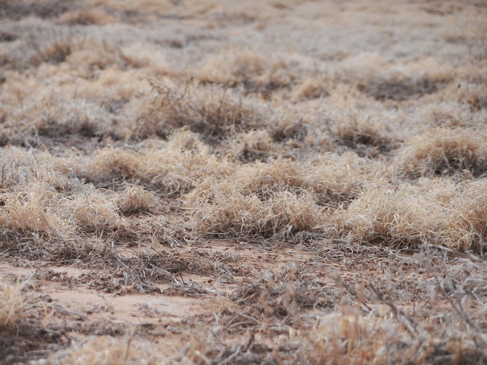 prairie grass pic