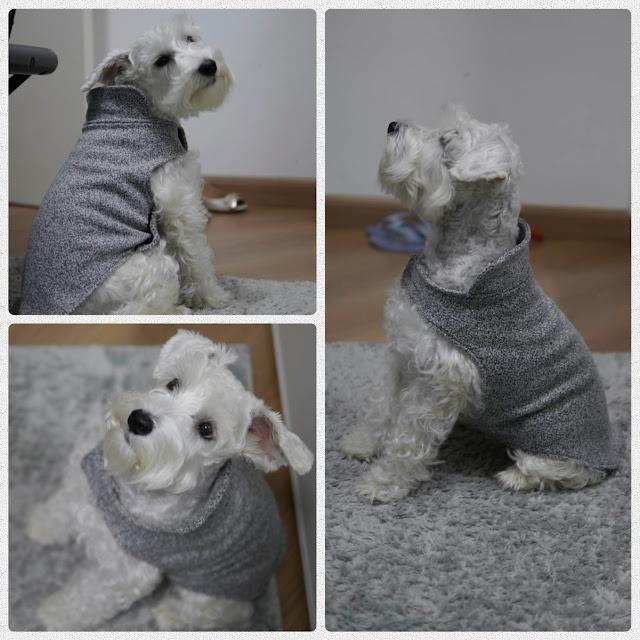 look do dia cachorro inverno