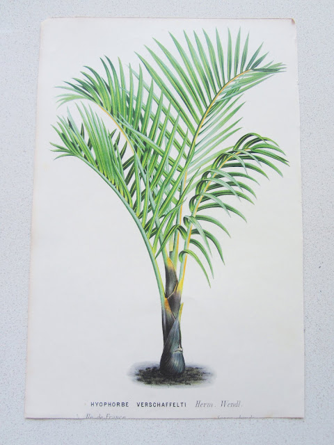 Herm Wendl botanical print
