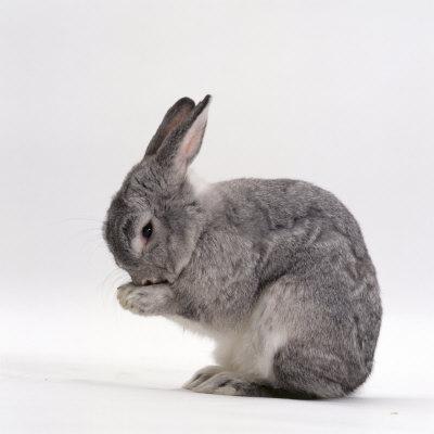 Hình ảnh những chú thỏ dễ thương