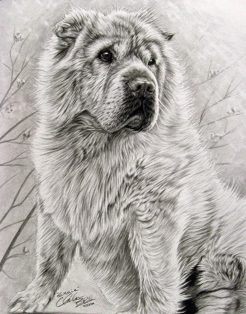 05-Charles-Black-Hyper-Realistic-Pencil-Drawings-of-Dogs-www-designstack-co