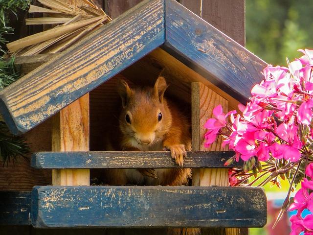 nichoir à oiseaux et écureuil