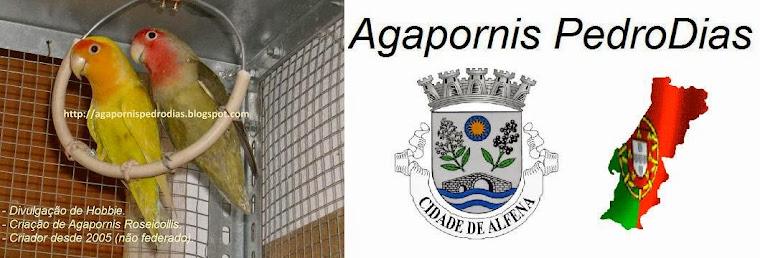 Agapornis PedroDias