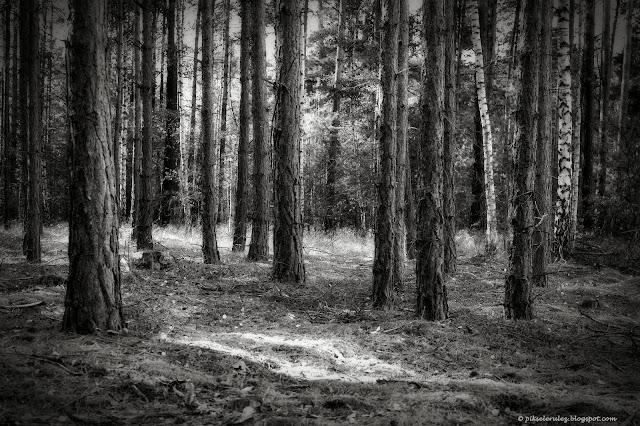 Im dalej w las, tym więcej drzew, las, black and white, zdjęcie, fotografia, grzyby, jesień