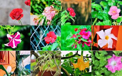 Flores de mi jardín - 12 fotos gratis para compartir