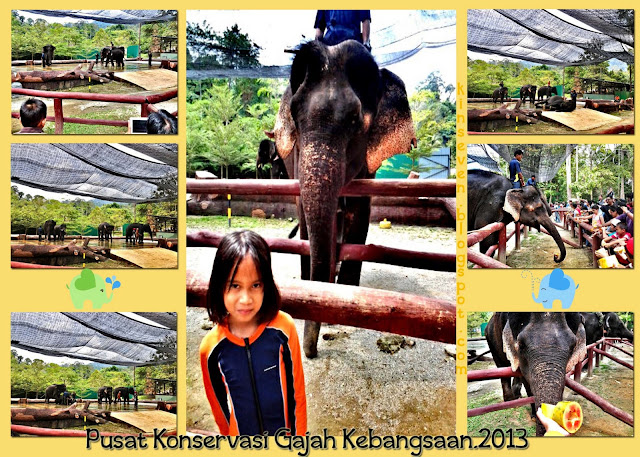 Pusat Konservasi Gajah, Lanchang Pahang.