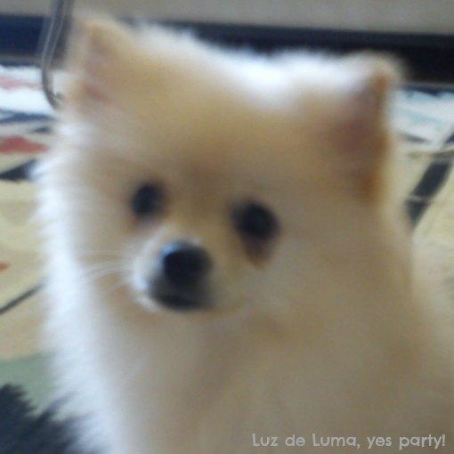 Vida Marie, Lulu