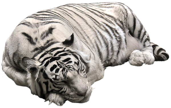 3D Cute Animals PNg Images