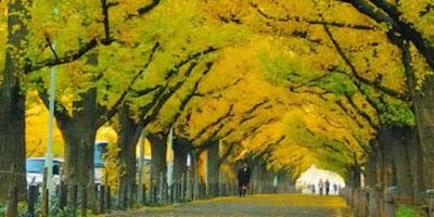 5 Terowongan Pohon Paling Menakjubkan di Jepang