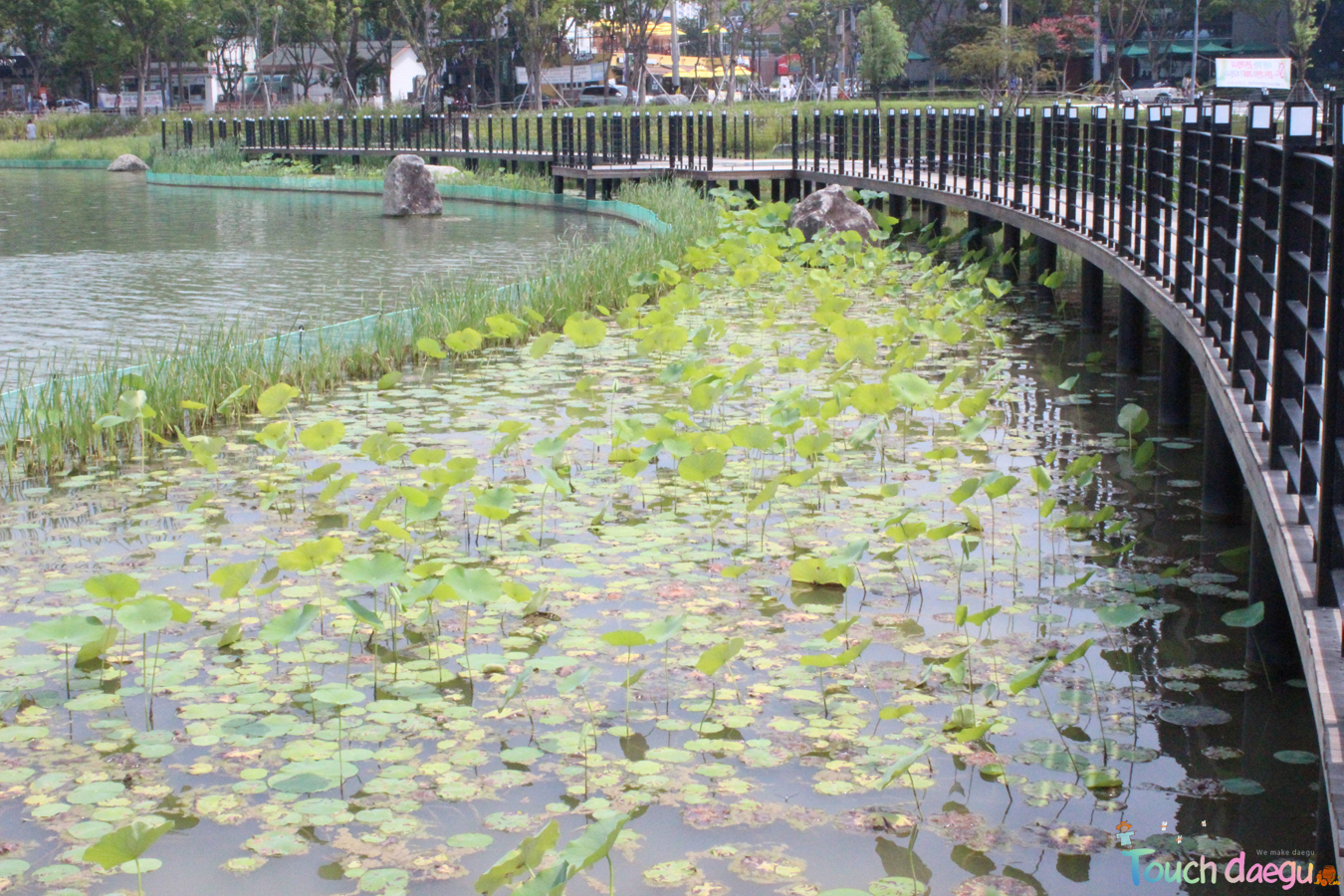 Suseong Lake 2