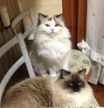 I gatti dormono di giorno e cacciano verso sera e se possibile di notte