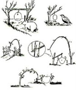 Membuat Jerat Hewan Di Hutan
