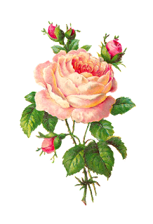 Digital Pink Rose Clip Art
