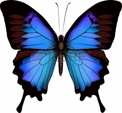 Dise o de u as acrilicas mariposas - Disenos de unas con mariposas faciles ...