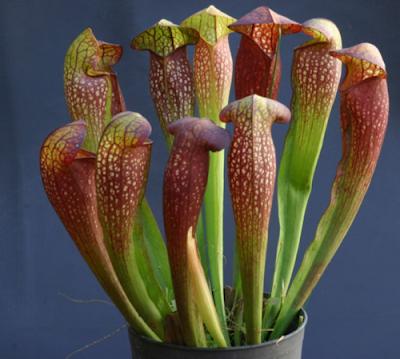 غرائب و عجائب النباتات-منتهى