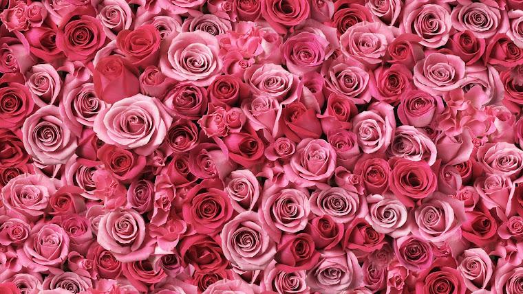 Somente Rosas....
