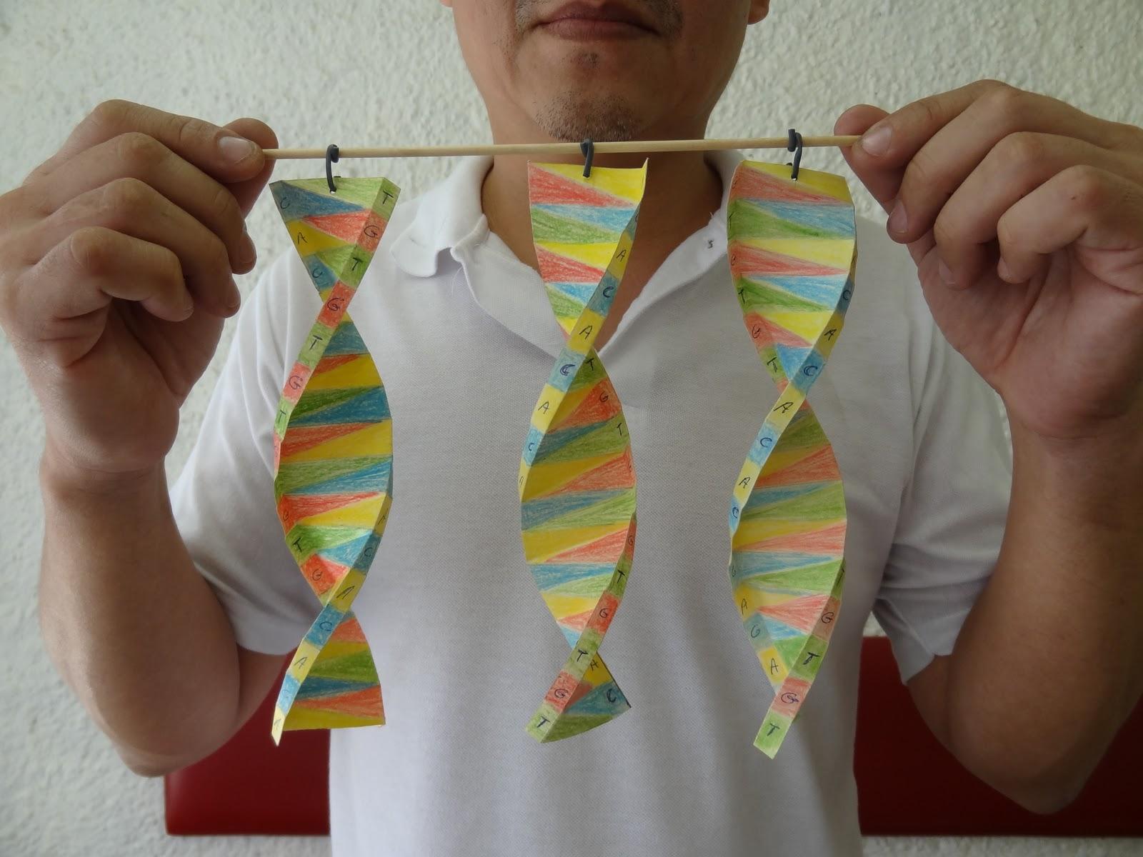 GENETICA ON LINE: MOLÉCULA DE DNA - ATIVIDADE - photo#36