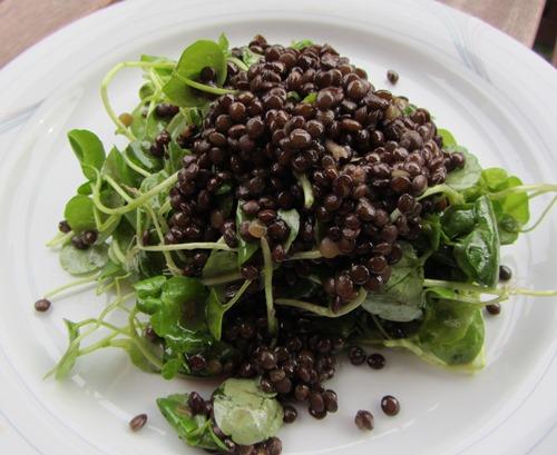 Ohne Tierleid Mampfen Simpel Und Vegan Linsen Brunnenkresse Salat