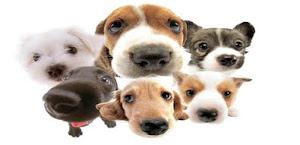 Apaixonados por cães