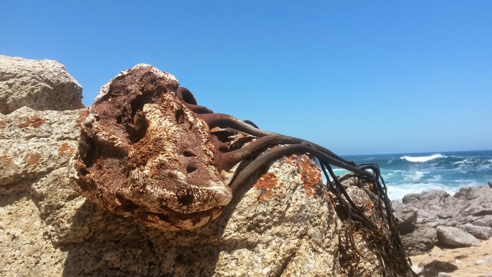 alghe-oceano-pacifico