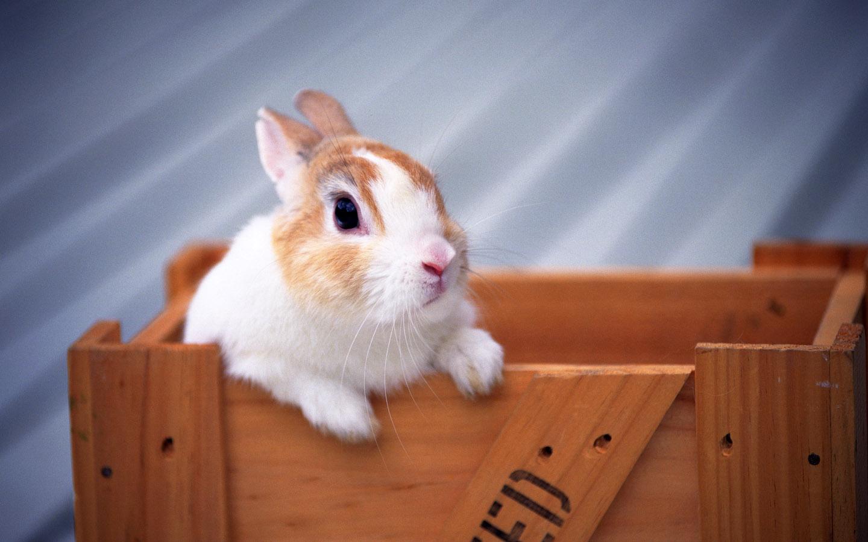 Cute Easter Bunny Rabbit HD Wallpaper