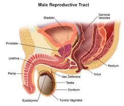 Penyembuhan Tradisional Penyakit Kanker Prostat