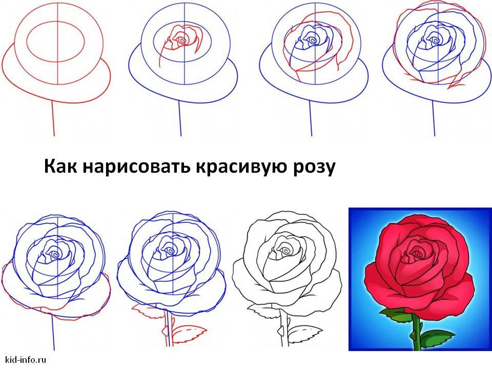 Нарисовать розы своими руками