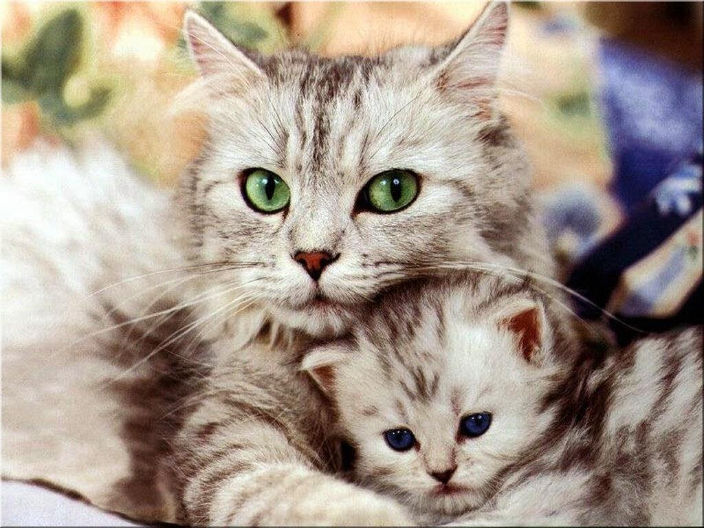 Muitas vezes Imagens de gatos e fotos de gatos engraçados, fofos, filhotes  IQ44