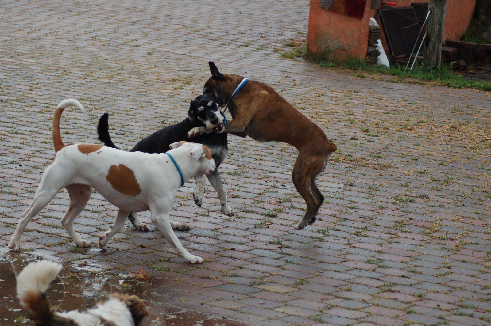 Coqui vega terapeuta natural y educador canino abril 2011 - El tiempo en vidreres ...