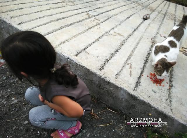 aktiviti bersama anak-anak diwaktu petang, tips mendidik anak sayangi kucing,