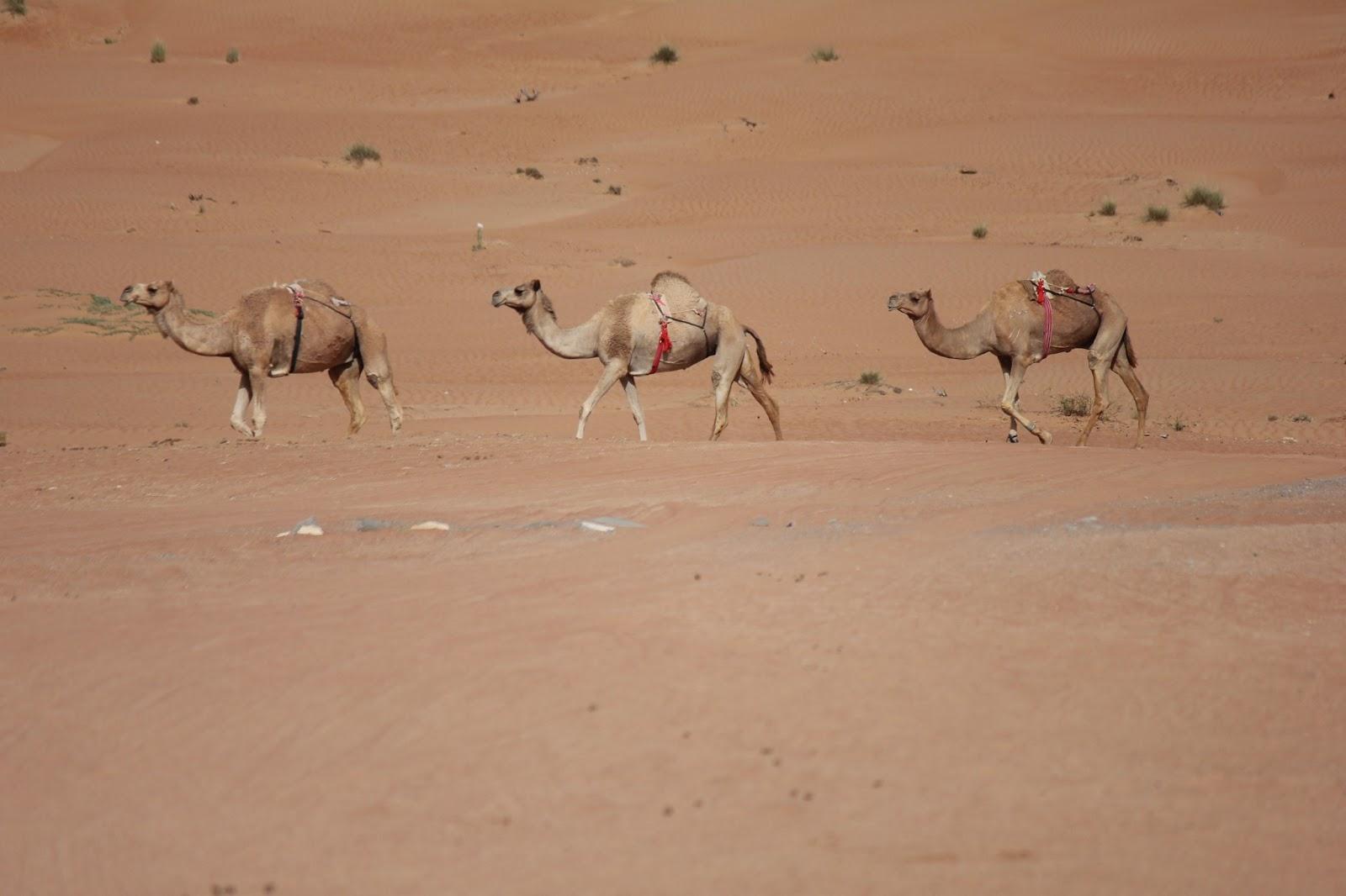 survival in a desert essay