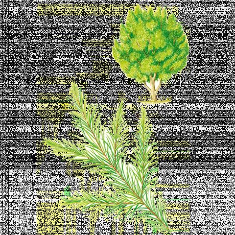 Collaborazione Pomata Albero del The