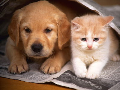 Cats and Dogs Photos
