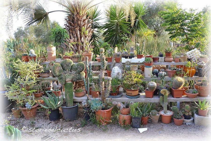 Storie del cactus febbraio 2015 for Cartellini per piante