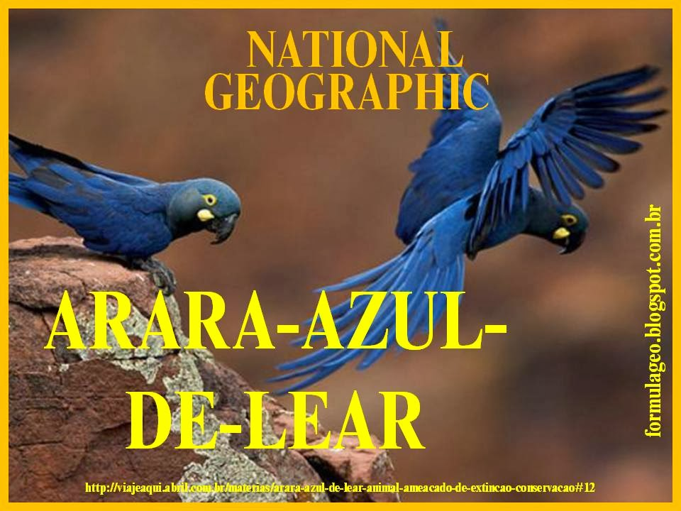 https://sites.google.com/site/magnun0006/Arara-azul-de-lear.pptx?attredirects=0&d=1