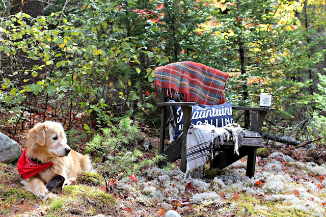 Golden retriever with Adirondack chair in fall - www.goldenboysandme.com
