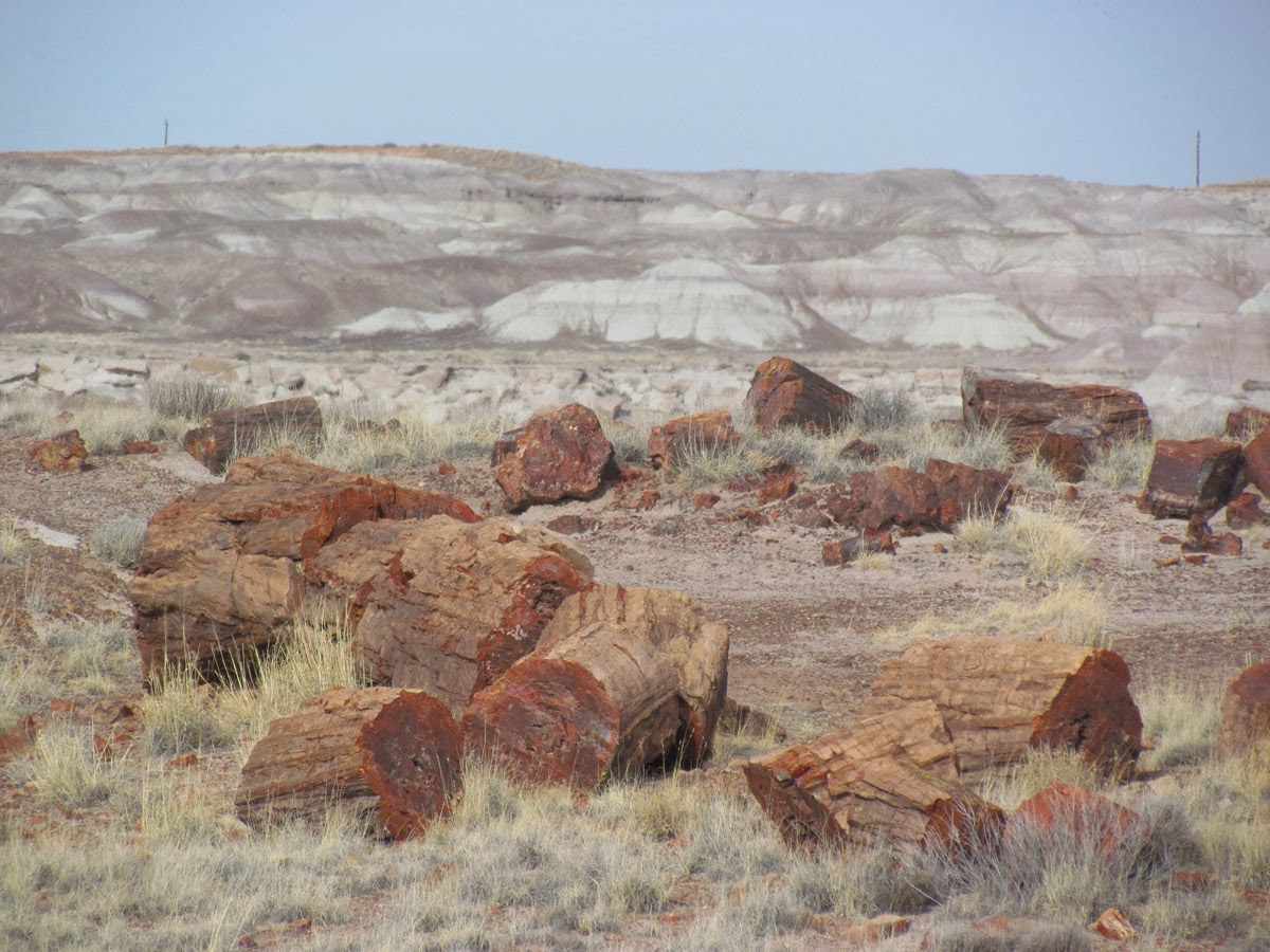 petrified forest natl pk gay singles Browse and compare cars for sale near petrified forest natl pk, az 86028 from local dealers and private sellers.