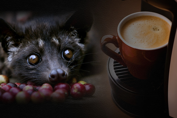 Civet coffee - photo#23