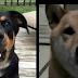 Whispering dogs go viral!