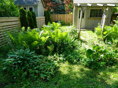 Mount Pleasant West garden clean up before Paul Jung Gardening Services Toronto