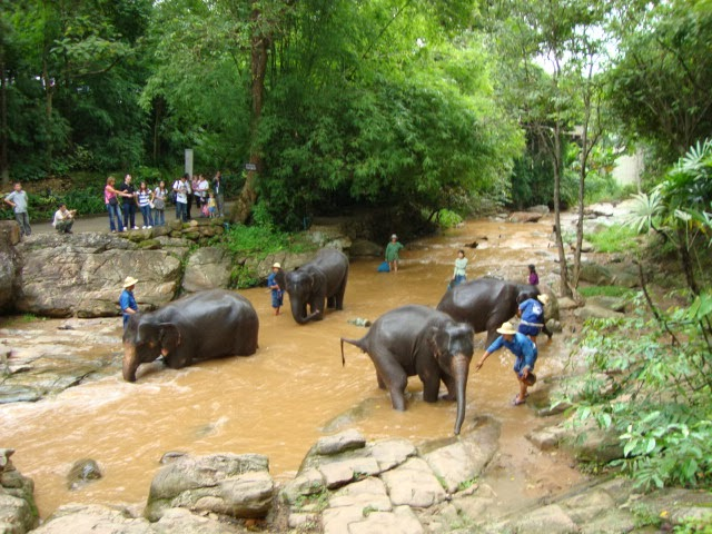 Mae Sa Elephant Camp in Chaing Mai