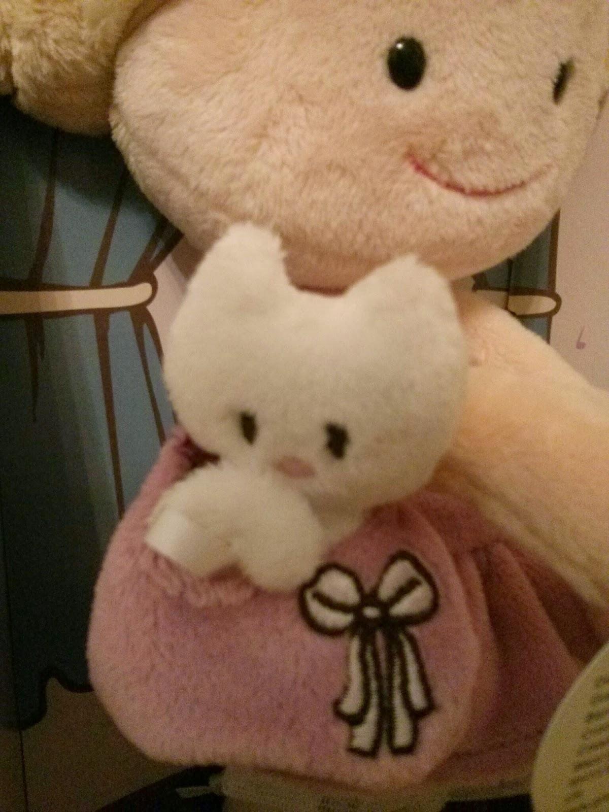 Miniclara cat