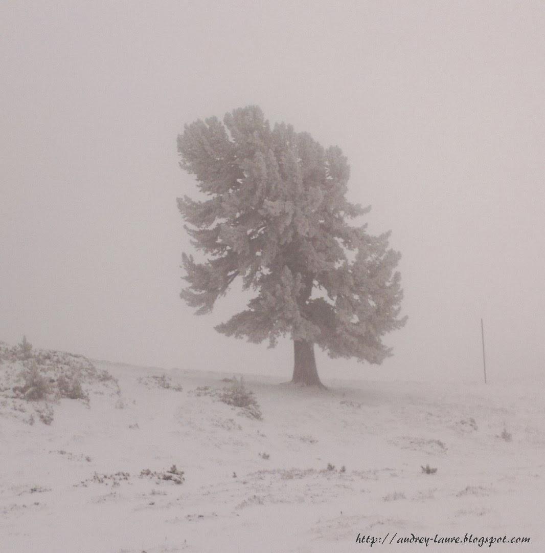arbre vent et neige